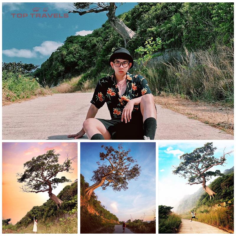 Quý khách chụp hình tại cây Cô Đơn tại Nam Du