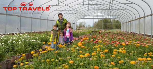 Trang trại hoa Lang Biang Đà Lạt