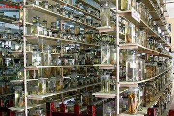 Viện Hải Dương Học Tại Nha Trang