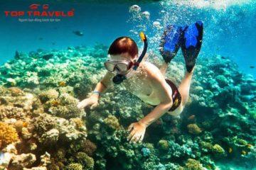 Du Lịch đảo Bình Ba lặn ngắm san hô