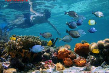 Lặn Ngắm San Hô Ở Côn Đảo