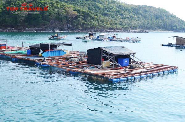 Lẩu cá bóp ở Nam Du