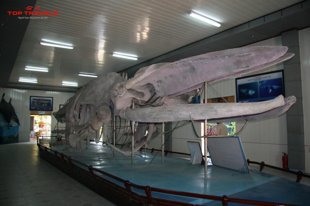 Viên Hải Dương Học -9 địa điểm du lịch Nha Trang