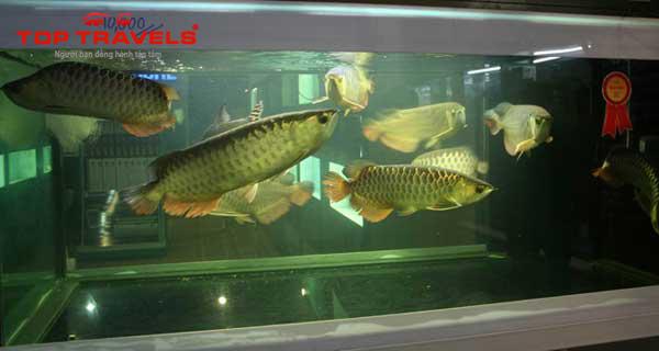 Chợ Cá Triệu Đô Chatuchak Tại Bang Kor Thái Lan