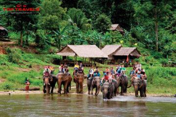 Công Viên Voi Ở Chiang Mai Thái Lan