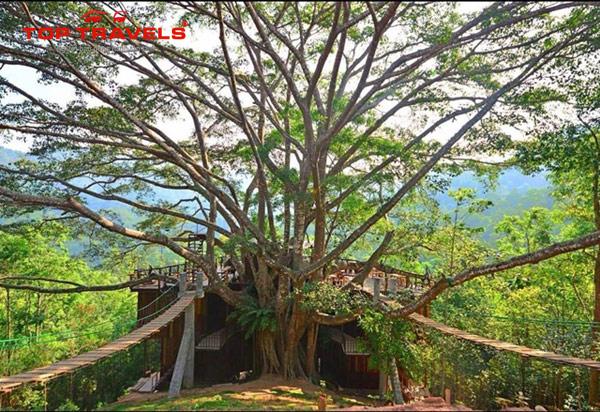 Du Lich Chiang Mai Khám Phá Quán Cà Phê Cực Hot