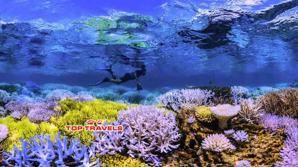 Tour lặn ngắm san hô phú quốc