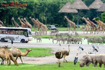 Vườn thú Safari World Tại Thái Lan